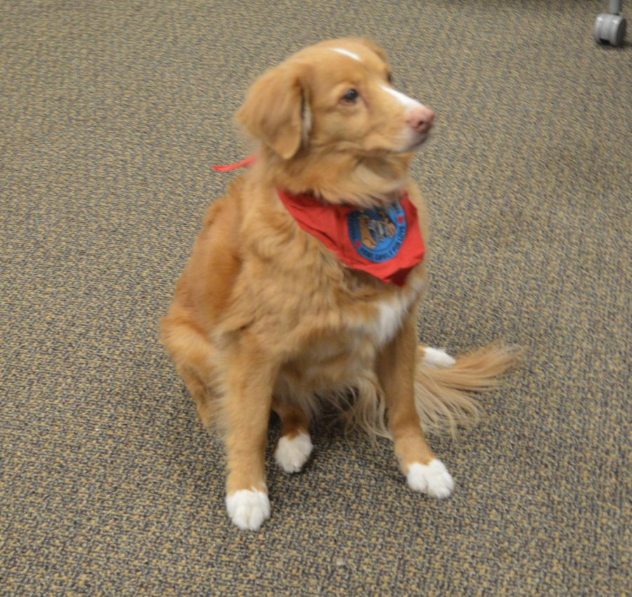 Meet Sami, Hamline's dog on duty.