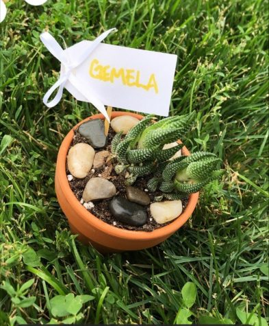 Courtesy of Naomi BreazealeThe adopt a plant event last semester allowed students to adopt their own plants. This succulent plant is still